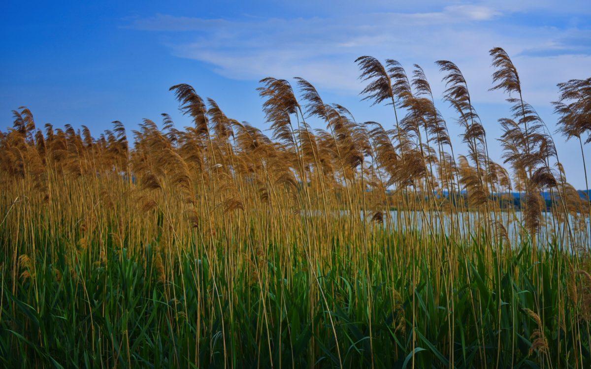 Pécs-tó és orfü